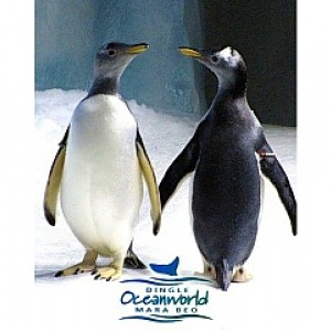 Dingle Oceanworld Aquarium - Mara Beo