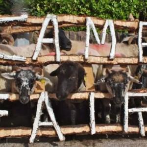 Camp Sheep Fair: September/Meán Fómhair