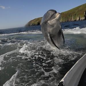 Dingle Dolphin Tours
