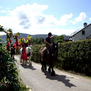 Long's Horse Riding & Trekking Centre